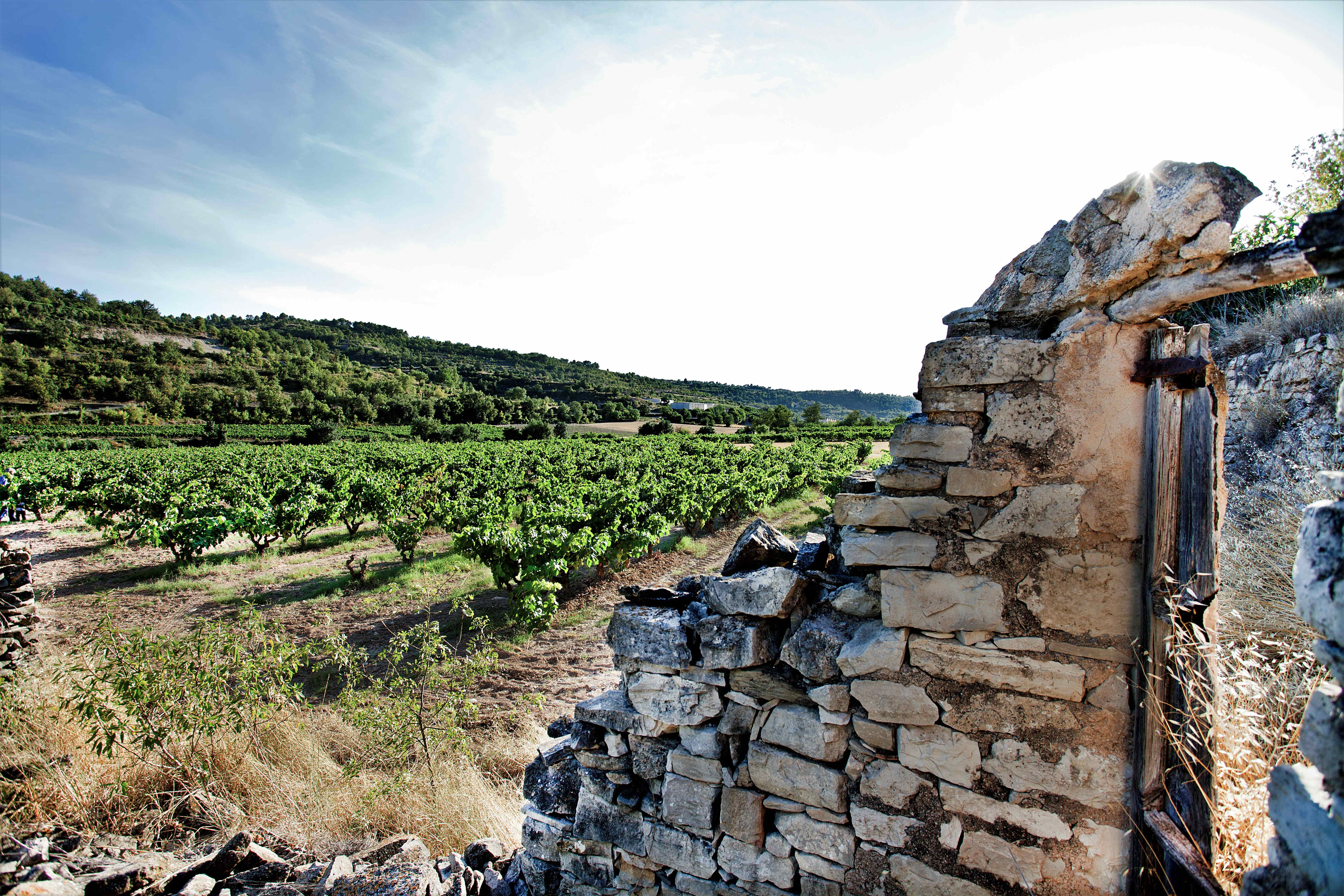 Celler Analec